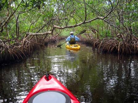 Kayaking through mangrove tunnel in Charlotte Harbor