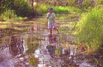 Jonathan Dickinson State Park Kitching Creek trail