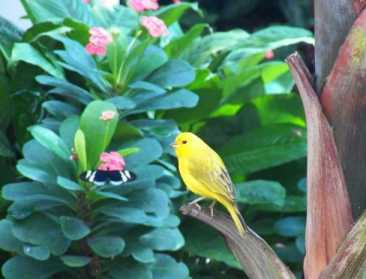 Key West butterfly conservatory finch