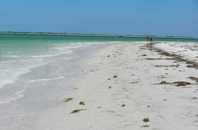Honeymoon Island, Dunedin, beach