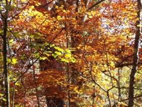 Fall colors at Torreya State Park
