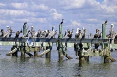 The dock at Atsena Otie Key,