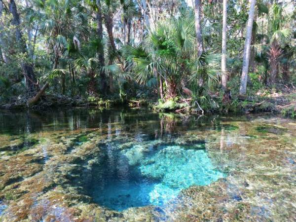 At the very start of the Chassahowitzka, you find one of the prettiest spots, the Seven Sisters Spring.
