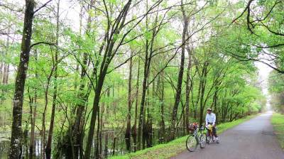 Cypress forest along Withlacoochee State Trail in the Croom Tract of Withlacoochee State Forest.