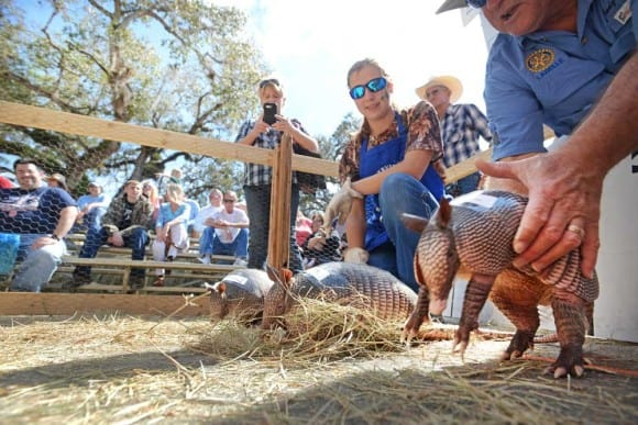 Armadillo races at 2015 Swamp Cabbage Festival. Photo courtesy Pete Cross.
