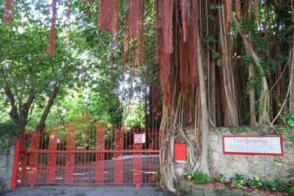The entrance to the Kampong in Coconut Grove, where a ficus tree is devouring the coral rock wall.