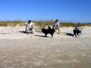 Dog beach at Smyrna Dunes Park
