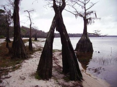 Lake Louisa State Park, Orlando, Florida