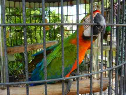 An aviary is a free hidden treat at a campground on Sanibel, Florida.