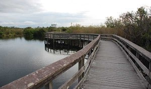 Anhinga Trail at Everglades National Park