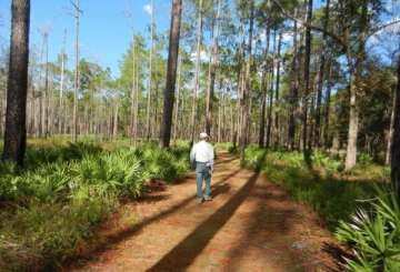 Except for re-enactment weekend, the Olustee Battlefield Historic State Park is a peaceful rural site through which the Florida National Scenic Trail passes.