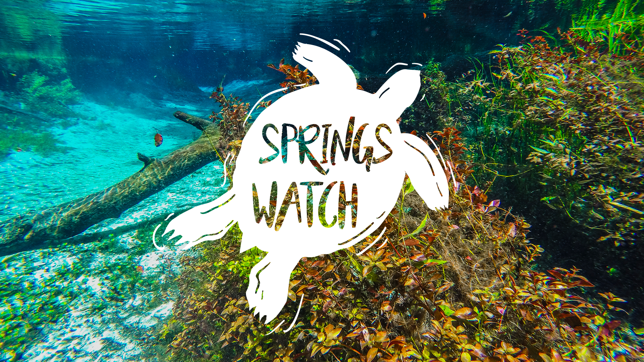 SpringsWatch Feature