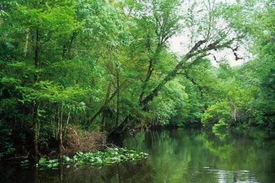 Ocklawaha River