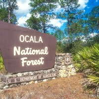 Ocala National Forest Campgrounds and Cabin Rentals