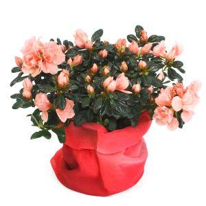 Комнатные цветы | Доставка, заказать, купить в Харькове