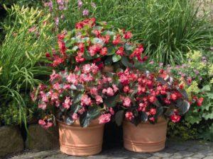 Комнатные цветы которые любят тень (фото и названия) и ...