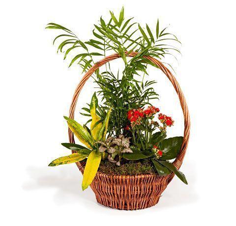cesta-de-plantas-variadas-con-chamaedorea-y-kalanchoe