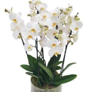 Centro tres Orquídeas