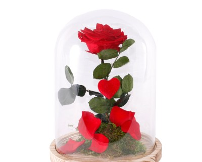 CÚPULA DE LA BELLA Y LA BESTIA. Rosas Eternas. Floristería Pétalos ·Tienda Online en Alcalá de Henares · Madrid