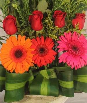 Amor mágico de gerberas para Arreglos florales Tijuana - Florerias en Tijuana