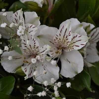 arreglos de flores para funeral. Florerías Pachuca