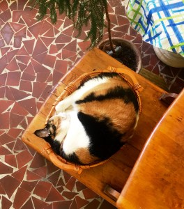 basket-sleeping