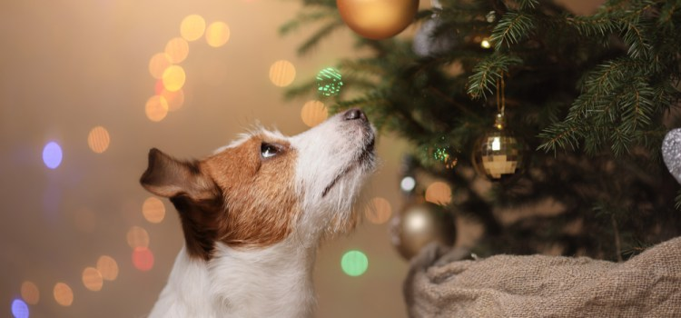5 Leuke kerstcadeaus voor je hond