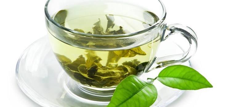 Groene thee ter ondersteuning van je huisdier