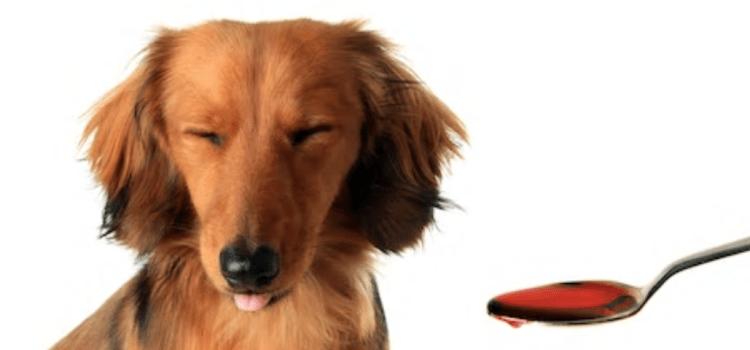 Tips om supplementen aan je huisdier te geven