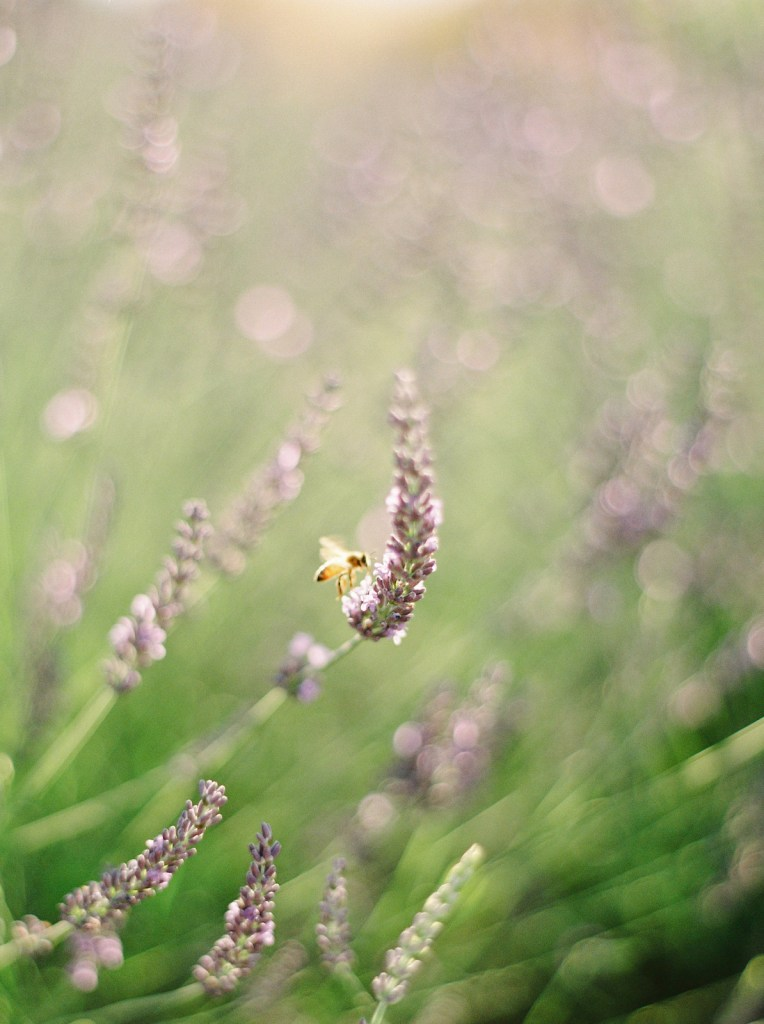 The_All_Natural_Bug_Spray_I'm_Using_This_Summer_Flourish_Caroline_Potter_NTP