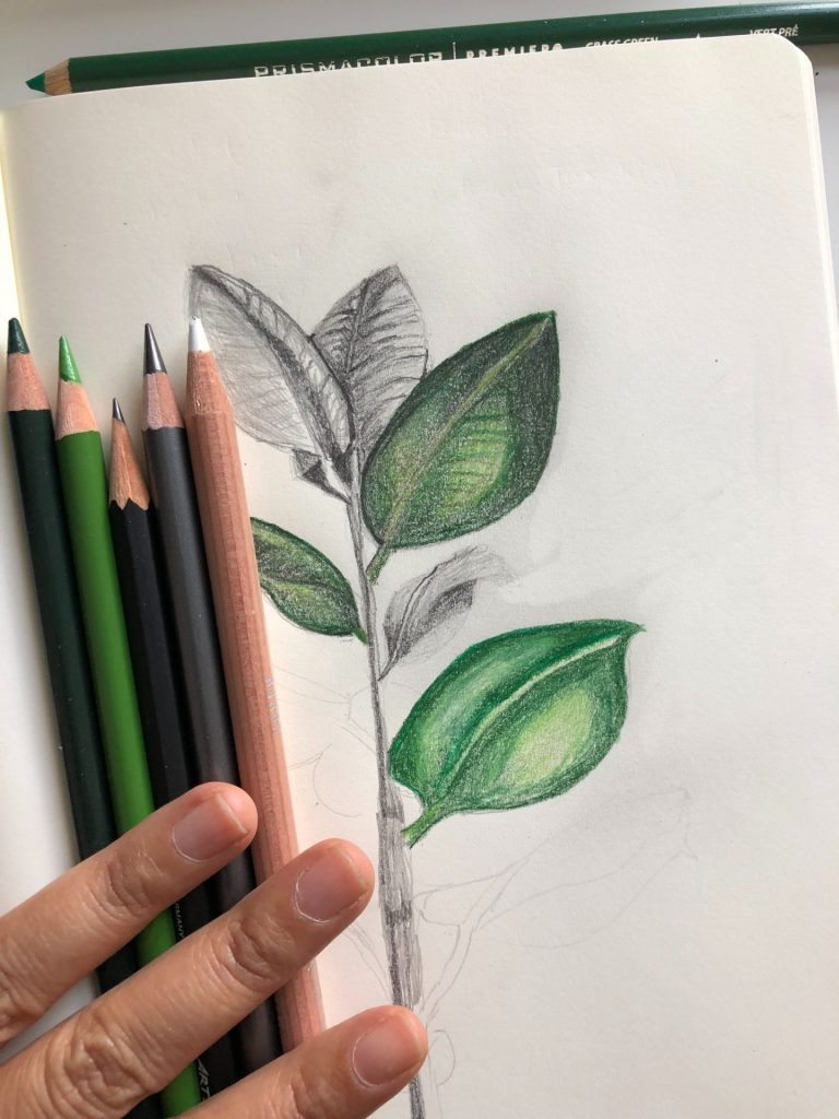 Color Pencil Plant