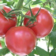 Vine Tomatoes (600g)