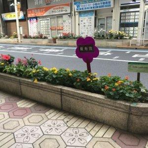 49ef72b19c9b2addea8db508ca9b00b7 300x300 - 花壇コンクールフォトギャラリー