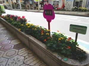 IMG 5340 300x225 - 花壇コンクールフォトギャラリー