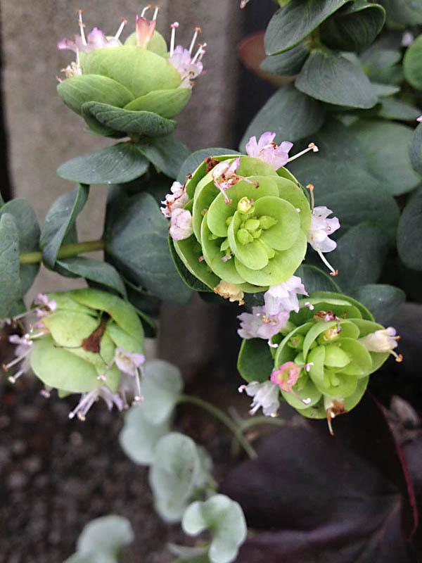 flower0058