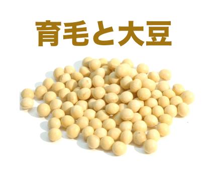 育毛 大豆