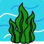 褐藻の育毛剤