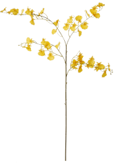 Orchid-Oncydium-yellow