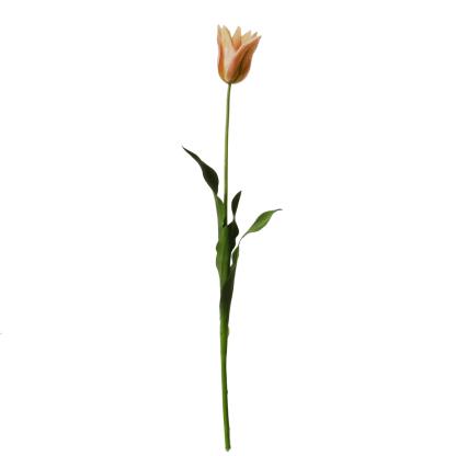 tall-Tulip-pink-green-64cm