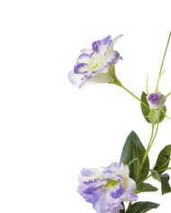 Lysianthus-lavender-3