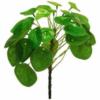 Pilea+Peperomioides-bush