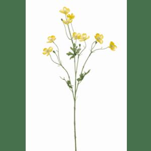 FlowerDutchess | boterbloem | 64cm | geel