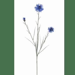 flowerdutchess-korenbloem