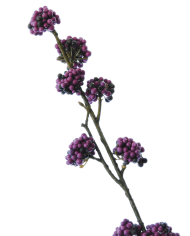 FlowerDutchess-Callicarpa-paars-detail-3