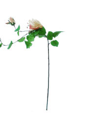 FlowerDutchess-rozen-tak-poederroze-grote-rozen-2