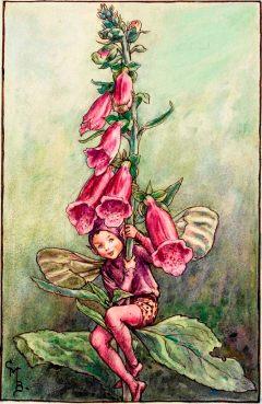 Foxglove flower fairies
