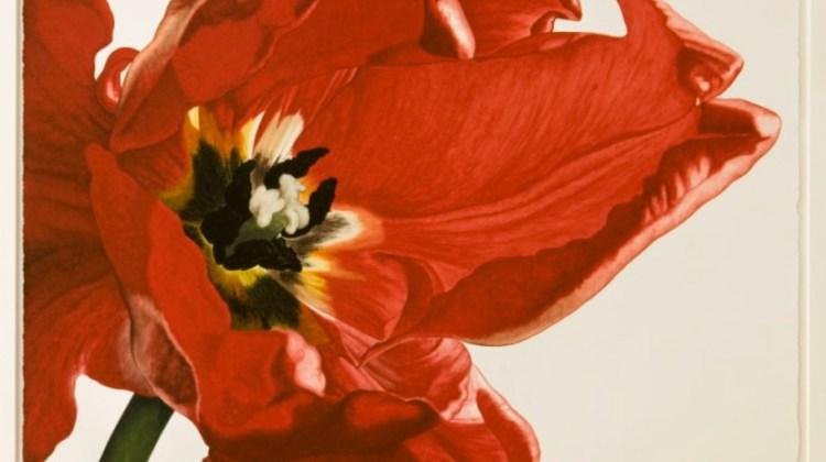 John Matthew Moore painting, tulip