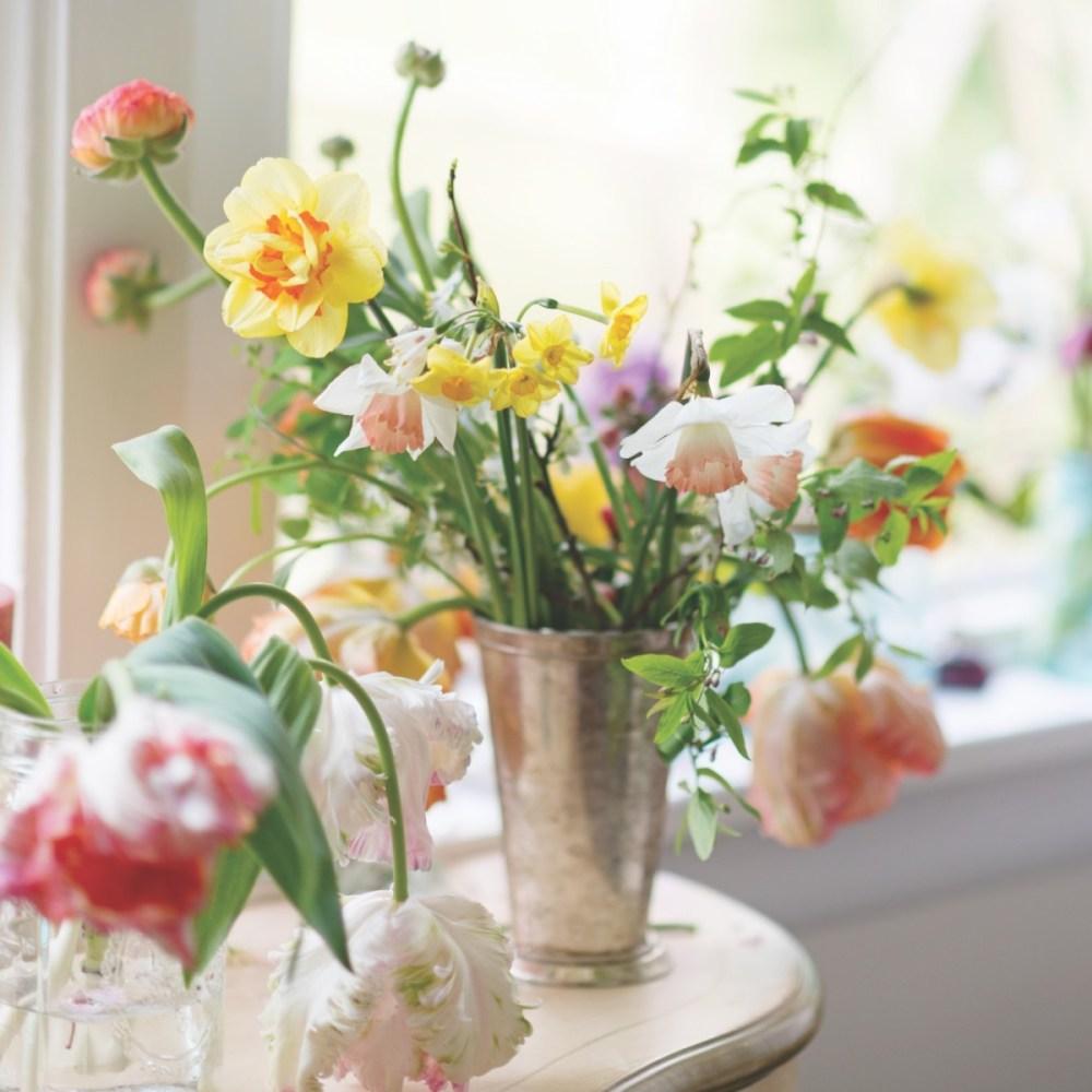 narcissus, jonquils, daffodils
