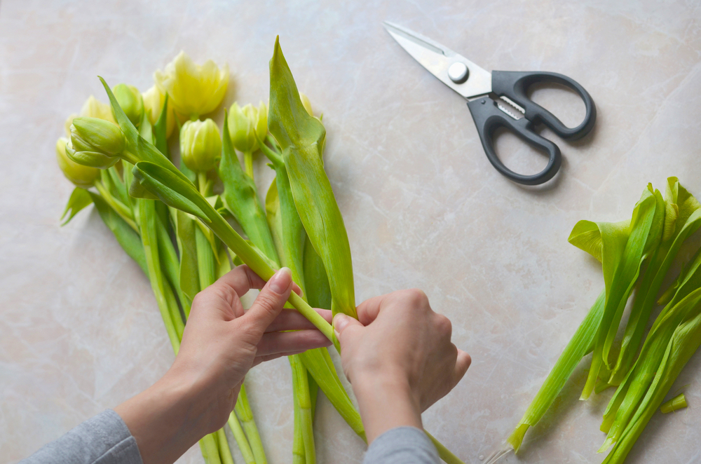 cutting tulips