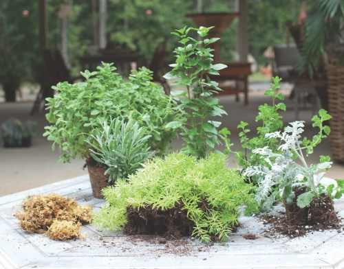 container herb garden materials